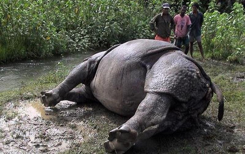 चितवन राष्ट्रिय निकुञ्जमा नौ महिनाको अवधिमा ३० गैँडाको मृत्यु